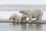 2014 - Alaska - Barter Island