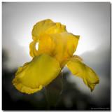 Fleurs et Macrophotos