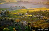 sunrise on vineyards