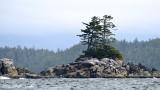 Island in the Broken Group, Barkley Sound, Vancouver Island, Canada