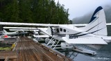 Beavers, Eagle Nook Resort, Jane Bay, Barkley Sound, Vancouver Island, Canada