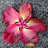 flower on beach