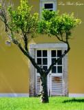 tree and yellow building ,Penha Longa, Linho Portugal