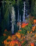 fall foliage over Cascade Mountains Washington