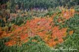 fall landsacpe