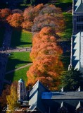 Fall at University of Washington Seattle