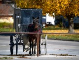 horse and carriage parking, Kalona Iowa