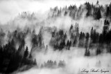foggy forest, Fall City, Washington