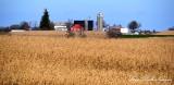 Red Barn and Silos, Wheat field, Kalona  Iowa