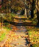 Raking the leaves, Iowa City, Iowa