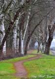 worn path, Duwamishi River, Seattle, Washington