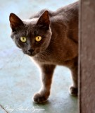 Shy Little Cat, Kapa'a Beach Park, Kapaau, Hawaii