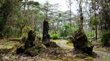 Lava Tree State Monument, Pahoa, Hawaii