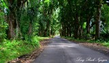 Winding Pohoiki Road, Pahoa, Hawaii