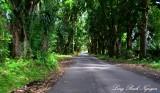 Winding Pohoiki Road, Pahoa, Hawaii