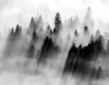 Drapped in fog Echo Lake Washington