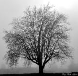 Tree in Fog West Seattle Washington