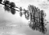 Row of Tree in flooded field, Chimakum, Washington 083