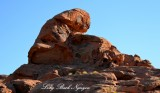 Piano Man in Valley of Fire State Park Nevada 528