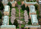 University of Washington Spring Time on Campus Seattle Washington 113a