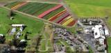 Tulip Town Mount Vernon Skagit Valley Washington 165
