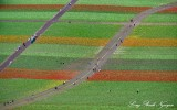 Tulip Field Skagit Valley Mount Vernon Washington 280