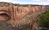 Betatakin Ruin and Canyon, Navajo National Monument, Shonto Arizona 300