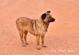 Friendly dog at Thunderbird Mesa Monument Valley Navajo Tribal Park Arizona 760