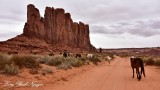 Horses at Elephant Butte Monument Valley Navajo Tribal Park Arizona 949
