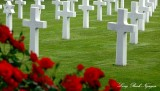 Roses for the fallen, Normandy American Cemetery, France