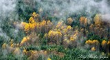 Fall Foliage  Above Washington State 2016