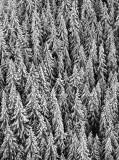 Frozen Tree Landscape 232