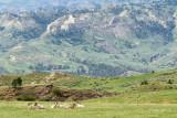 Bighorn Sheep-5542.jpg