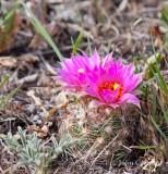 cactus-9870.jpg