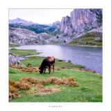 Llac Enol • Llacs de Covadonga, al Principat d'Astúries