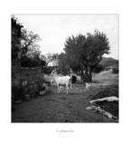 30/08/2016 · Les cabres de Julio