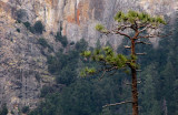 Against wall/floor of Bridalveil area , Tunnel View, Day 1.  SX. #2150