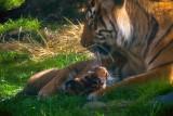 The maternal instinct. mImg_1922r.jpg