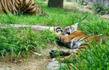 Cub Jillian takes a somewhat rare rest time. #2736