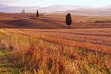 Tuscany In My Heart