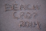 2014 Beach Crop in Sandbridge