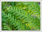 Scottish Rain Forest