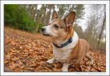 A Woodland Dog