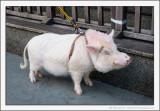 Pig Parking