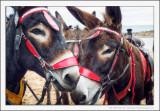 Donkey Hote