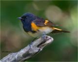 texas_birds