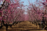 2015 Spring flower trip-Fresno,CA.