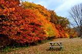 2015  Autumn leaves trip.-Indiana