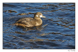 canards_ducks