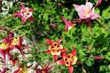 Flowers in Aspen, Colorado